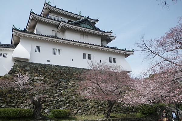 和歌山城とサクラ