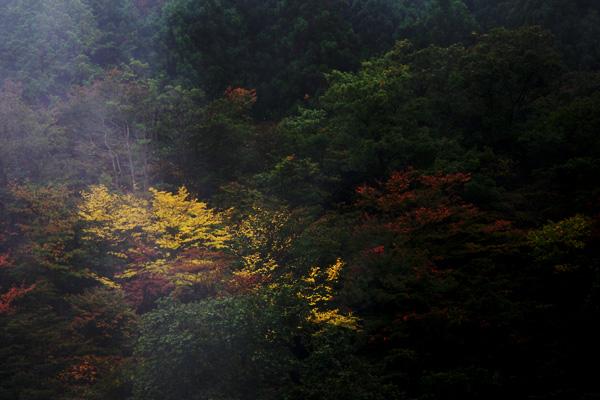 霧の中の黄葉3