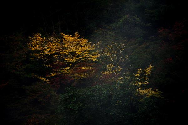 霧の中の黄葉4