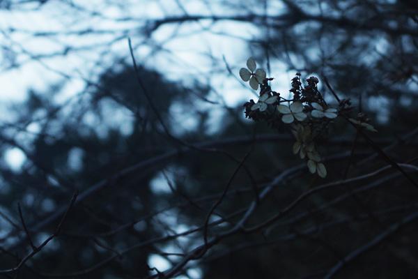 四つ花の咲く木
