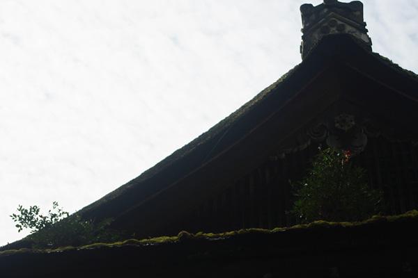 屋根の上の共生