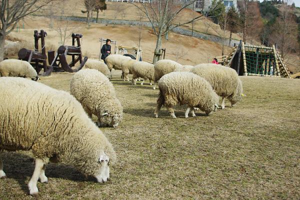 羊のいる公園