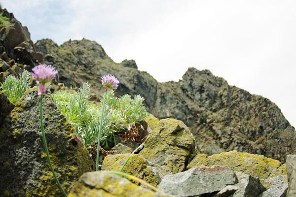 岩壁とお花