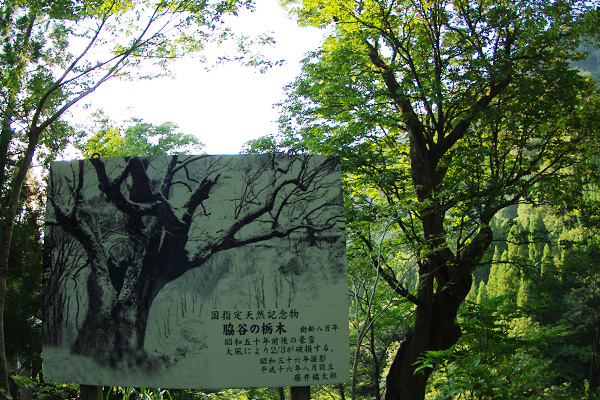 脇谷の栃木