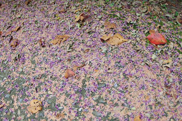 紫と葉っぱ