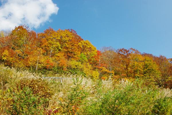 秋の風景その1
