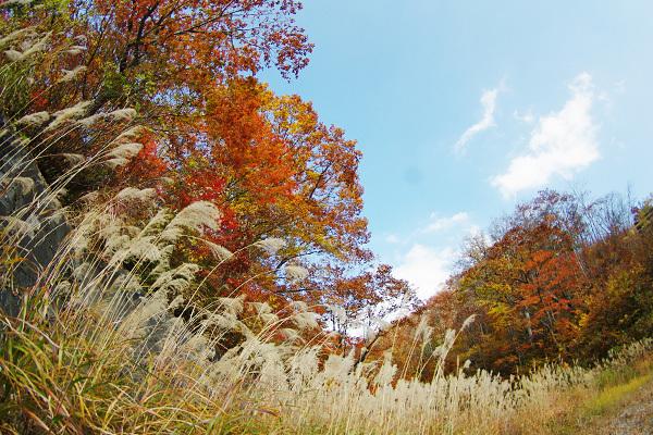秋の風景その2