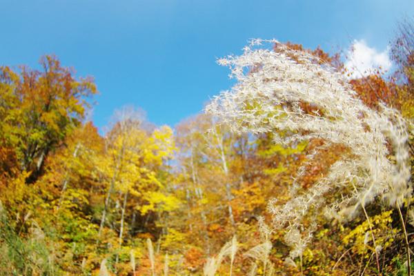 秋の風景その3