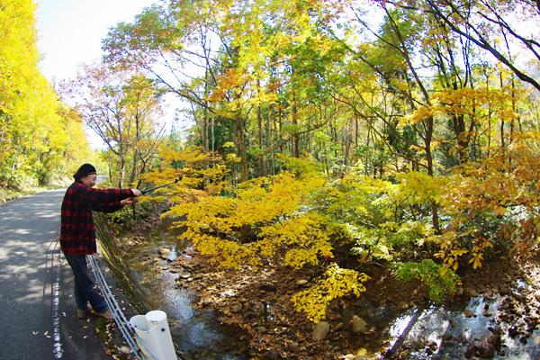 秋の風景その5