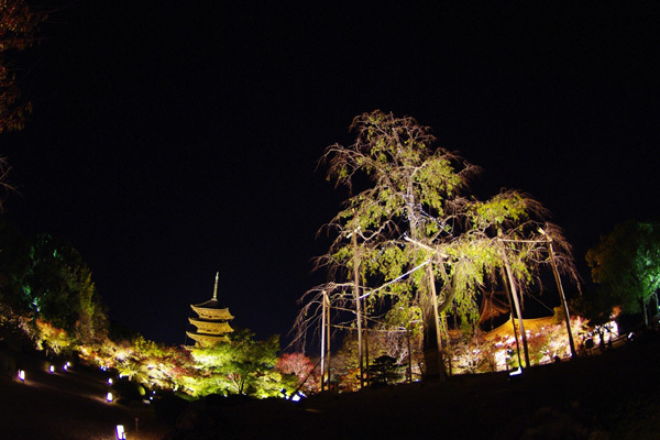 東寺ライトアップ〜その10